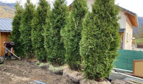 Paysagiste à Saint-Alban-d'Hurtières pour la réalisation de brise-vue de jardin végétal
