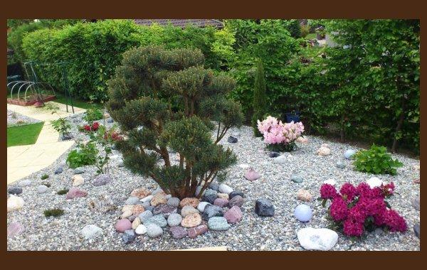 Traitement des arbres et arbustes Albertville