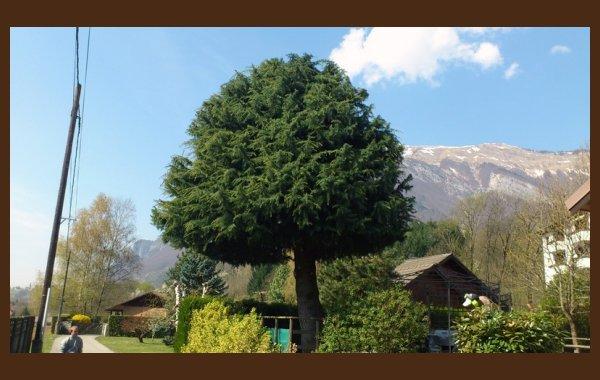 Traitement des arbres Albertville