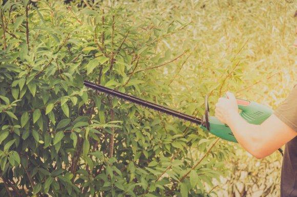 Taille et entretien d'arbuste par paysagiste à Chambéry