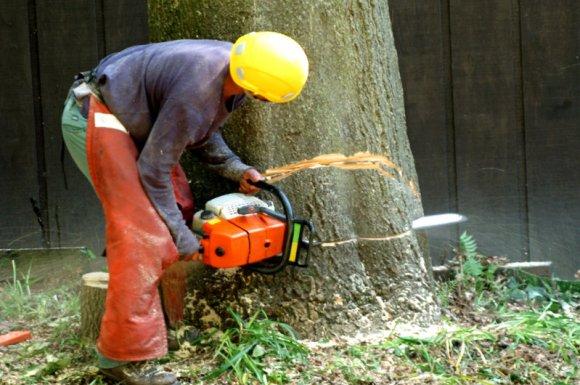 Élagage et abattage d'arbres par paysagiste élagueur à Albertville