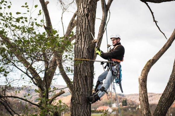 Taille d'entretien d'arbres par élagueur à Chambéry