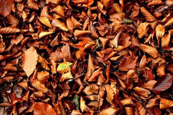 Ramassage des feuilles Aiguebelle