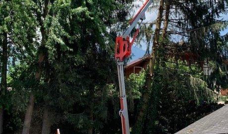 Paysagiste spécialisé dans le démontage à la nacelle d'épicéas déstabilisés suite à la tempête Albertville