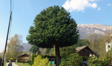 Taille des arbres fruitiers et d'ornement Moutiers